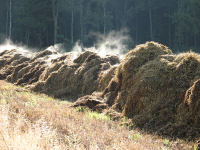 Odour emissions from livestock activities need careful management and the best strategies